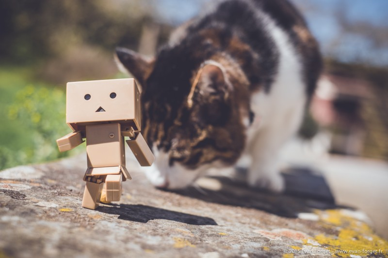 Danbo - Evan Forget Studio Raw Photographe Nantes